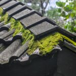 Roof Moss Cleaning West Barnes