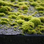 Roof Moss Removal Company West Barnes