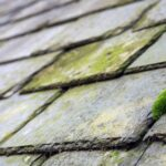 Roof Moss Removal Contractor West Barnes