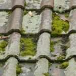 Roof Moss Removal Services West Barnes
